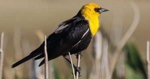 Birds, Searching for Nora, Prairie life, bird migration, bird populations, birdwatchers, grassland, historical fiction, writing, novels