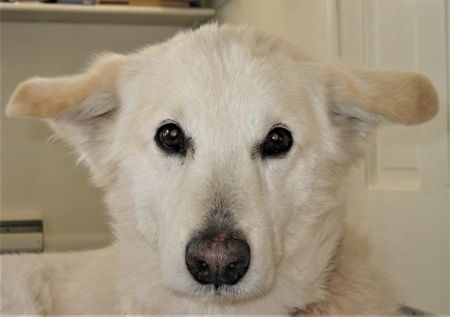 white dog to illustrate blog